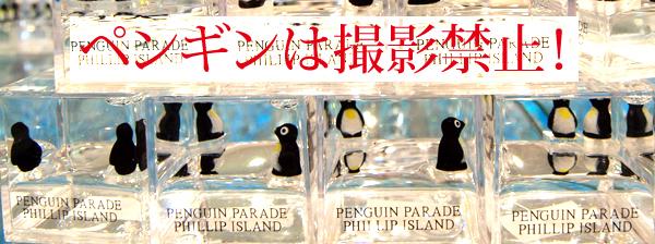 フィリップ島 | 旅々、沈々。